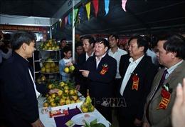 Lần thứ 2 tổ chức lễ hội tôn vinh sản phẩm cam Hưng Yên
