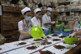 Hà Nội: Phát triển y học cổ truyền để nâng cao chất lượng khám chữa bệnh