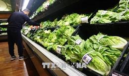Bùng phát dịch bệnh từ khuẩn E.Coli trong rau diếp trồng ở California, Mỹ