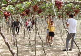 Phát triển sản phẩm đặc thù vùng khô hạn phục vụ du lịch