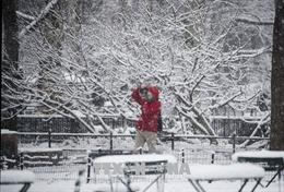 Bão tuyết đổ vào Đông Nam nước Mỹ, 3 người thiệt mạng