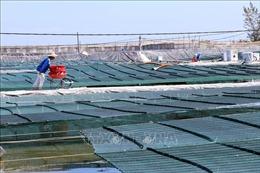 Lần đầu tiên Quảng Nam nuôi tôm thâm canh bằng công nghệ cao