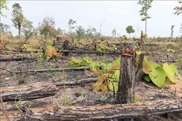 Làm rõ vụ hơn 7,3 ha rừng ở xã biên giới Ia Mơ bị chặt phá