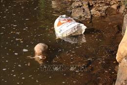 Người dân vứt xác lợn chết trên suối Cam Ly ở Lâm Đồng