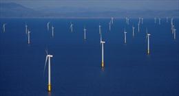 Anh đầu tư 250 triệu bảng cho phong điện trong nỗ lực trở thành nước đi đầu thế giới về năng lượng tái tạo