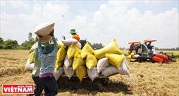 Tìm đầu ra cho lúa gạo vùng Đồng Tháp Mười - Bài 2: Nâng cao chất lượng gạo xuất khẩu