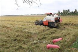Tìm đầu ra cho lúa gạo vùng Đồng Tháp Mười - Bài cuối: Phát huy vai trò của hợp tác xã