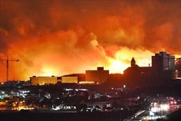 Đại sứ quán Việt Nam tại Hàn Quốc theo dõi sát sao tình hình cháy rừng tại Goseong