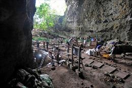 Lần đầu tiên tìm thấy bằng chứng về tông người tiền sử cách đây 50.000 năm
