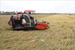 Chưa tận dụng được lợi thế từ cơ giới hóa nông nghiệp
