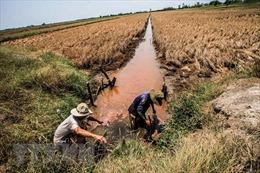 Từ 28/4 - 6/5, mặn sẽ gia tăng ở Đồng bằng sông Cửu Long