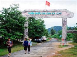 Gia Lai: Phát hiện nhiều sai phạm trong quản lý, bảo vệ rừng năm 2018
