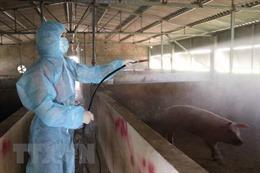 TP Hồ Chí Minh dốc toàn lực ứng phó dịch tả lợn châu Phi