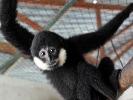 Săn bắt, buôn bán động vật hoang dã - Bài 1: Tác động xấu đến đa dạng sinh học