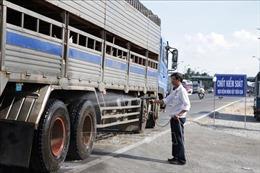 Tiền Giang siết chặt các biện pháp phòng, chống dịch tả lợn châu Phi