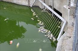 Cá chết hàng loạt ở hồ Thạc Gián là do thiếu oxy