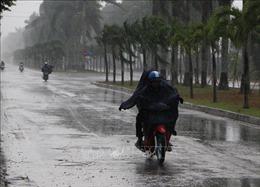 Nghệ An: Cơn 'mưa vàng' cứu nguy sản xuất nông nghiệp và cháy rừng