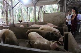 UBND xã cam kết hỗ trợ tiểu thương để tuyên truyền người dân không 'quay lưng' với thịt lợn