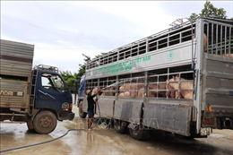 Tây Ninh tích cực ngăn chặn dịch tả lợn châu Phi