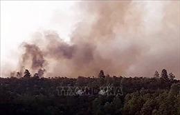 Dập tắt hoàn toàn đám cháy rừng keo ở huyện Hiệp Đức, Quảng Nam