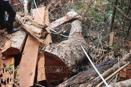 Bắt quả tang bốn đối tượng ngang nhiên phá rừng chiếm đất ở Lâm Hà, Lâm Đồng