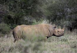 Lần đầu tiên trái phiếu bảo vệ động vật sắp được phát hành
