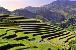 Vùng cao Mù Cang Chải thu hút du khách