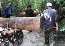 Củng cố hồ sơ khởi tố nhóm chở trộm gỗ tại rừng Dầu Tiếng