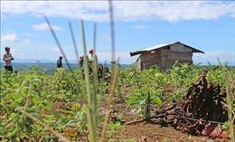 Huyện Bảo Lâm, Lâm Đồng thu hồi 231 ha đất rừng giao cho cộng đồng