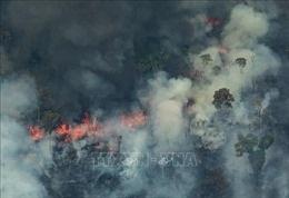 Tiếp tục bùng phát hàng trăm đám cháy rừng Amazon tại Brazil