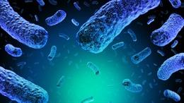 Ăn thịt không đảm bảo chất lượng, ba người tử vong do nhiễm khuẩn listeria