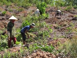 Quản lý đất nông, lâm trường - Bài 2: Những hạn chế trong sắp xếp, đổi mới, phát triển các công ty nông, lâm trường