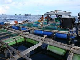 Ứng dụng công nghệ nuôi trồng hải sản bền vững - Bài 1: Xu hướng phát triển tất yếu
