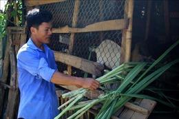 Hỗ trợ đồng bào dân tộc thiểu số phát triển sản xuất, giảm nghèo bền vững