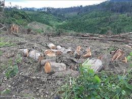 Khẩn trương điều tra, xử lý vụ mở đường phá rừng chiếm đất ở Đam Rông