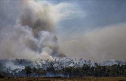 Tổng thống Brazil kêu gọi quốc tế tôn trọng chủ quyền đối với rừng Amazon