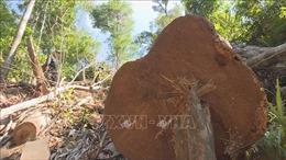 Chuyển hồ sơ sang Cơ quan điều tra vụ Ban Quản lý rừng phòng hộ Chư Mố làm mất hơn 1.470 ha rừng