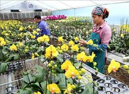Đan Phượng (Hà Nội): Phấn đấu đạt chuẩn nông thôn nâng cao