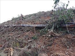 Lâm Đồng yêu cầu thu hồi diện tích đất do phá rừng để trồng lại rừng
