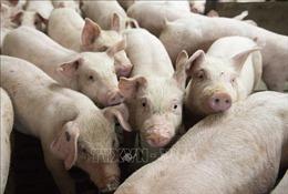 Trung Quốc sẽ nhập khẩu lại thịt bò và thịt lợn của Canada