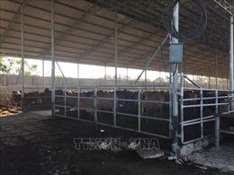 Người dân bức xúc, yêu cầu di dời trại nuôi nhốt bò gây ô nhiễm ra khỏi khu dân cư