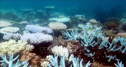 Rạn san hô lớn nhất thế giới vào mùa sinh sản