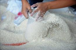 Hỗ trợ bổ sung gạo cho đồng bào dân tộc tự nguyện bảo vệ rừng tỉnh Nghệ An