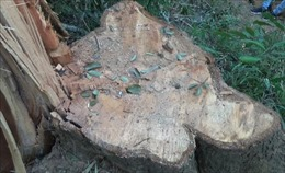 Phát hiện vụ phá rừng phòng hộ Sêrêpôk với quy mô lớn