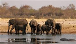 Ra mắt phim ngắn truyền thông phòng ngừa tội phạm về động vật hoang dã