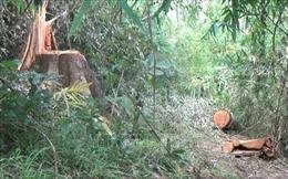 Xử lý nghiêm vụ phá rừng phòng hộ Sêrêpốk, huyện Đam Rông