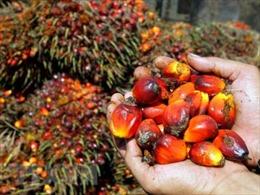 Ấn Độ giảm thuế nhập khẩu đối với dầu cọ từ các nước ASEAN