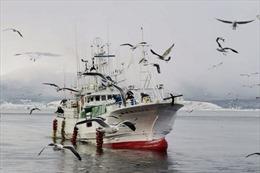Nga trả tự do cho tàu cá Nhật Bản