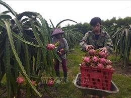 Giải quyết tình trạng nông sản mất giá do tác động của dịch bệnh
