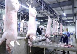 Nóng tuần qua: Đề nghị truy tố 29 bị can trong vụ gây rối trật tự tại xã Đồng Tâm; Nhập khẩu lợn Thái Lan để hạ giá trong nước